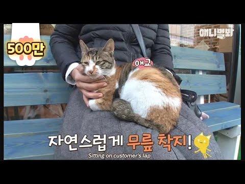 피자집 의자에 앉기만 하면~ 고양이가 무릎위로 온다? 고양이를 부르는 요술 의자