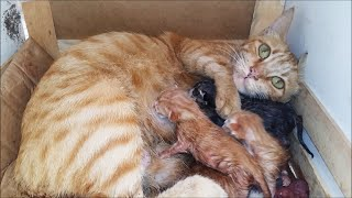 Pregnant Cat Gives Birth To 6 Kittens