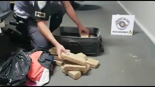 Baixar Polícia Rodoviária apreende mais de 11 quilos de maconha, em Assis