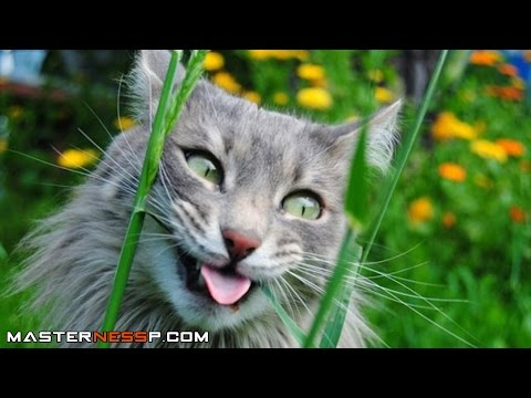 Funny Cat Videos Compilation - Funny Cats - A Funny Cat Videos Compilation 2016 New HD