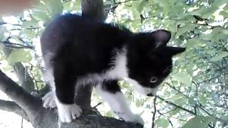 Котёнок кузя в дар