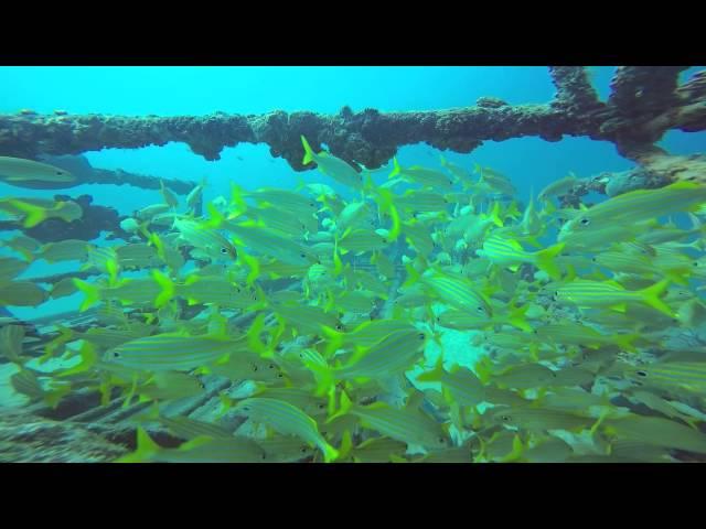 Wreck Diving Aruba Deb 2 2015