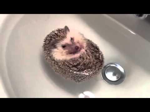 Смешные животные - XaXa-