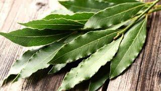 Chá Caseiro – Maravilhoso Para A Saúde