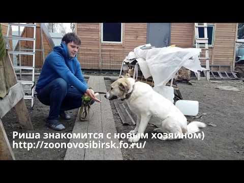 знакомства новосибирск love
