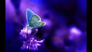 ♫ PLANET CHILL ♫: Aquarius - Butterfly [Chillout Music]