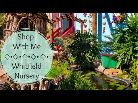 Shop With Me - Whitfield Nursery   Garden Nursery