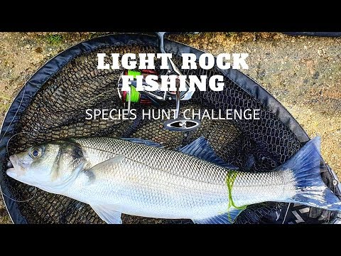 Light Rock Fishing - Species Hunt Challenge