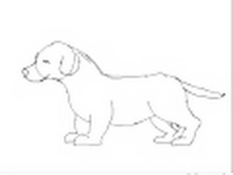Cmo dibujar un perro cachorro raza labrador  YouTube