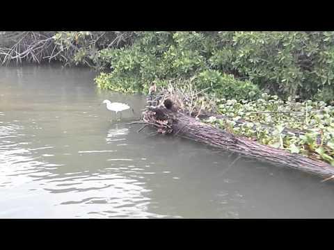 Lake Necaxa, Tecolutla, Veracruz, México. Take 3  Mangrove Swamp