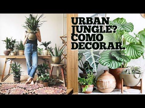 COMO DECORAR COM PLANTAS : FLORESTA URBANA : INDOOR JUNGLE : URBAN JUNGLE : PAULO BIACCHI