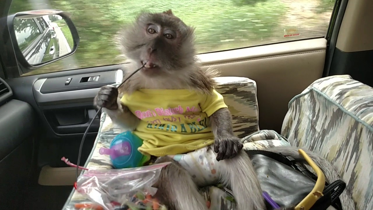 Monkey Wired In Her Car Seat