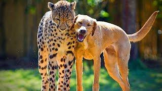 Animal's Best friends 🐶 🐱 Unbelievable Animals Friendship (Part 2) [Funny Pets]
