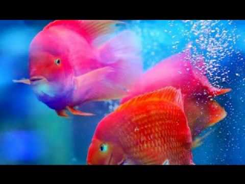 2013 Most Beautiful Fish In The World Youtube