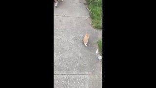 これもまたNNNのやり方だ。犬の散歩をさせていたら、どこからともなく子猫がやってきた!?