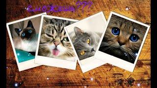 Угадай породу кошек.А знаешь ли ты страну их происхождения?Проверим