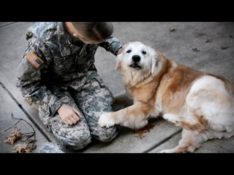 Dogs See Owners After Long Time (NEW) [Funny Pets]