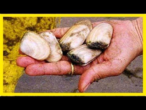 Marine biotoxin public health warning - the bay's news first