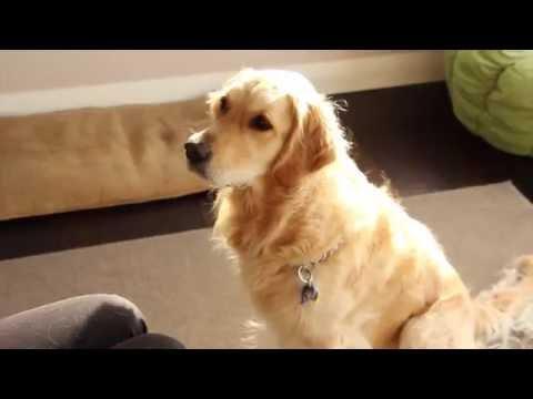 Dog registration | Lotte the dog