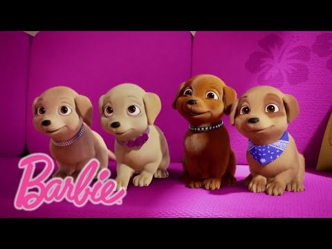 Meet Skippers Puppy DJ