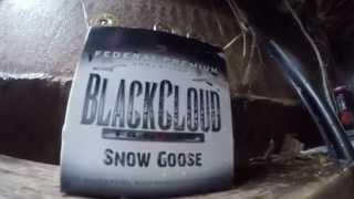 Snow Goose Hunt 2015