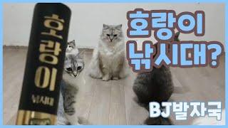 시청자분이 보내주신 고양이 장난감 리뷰