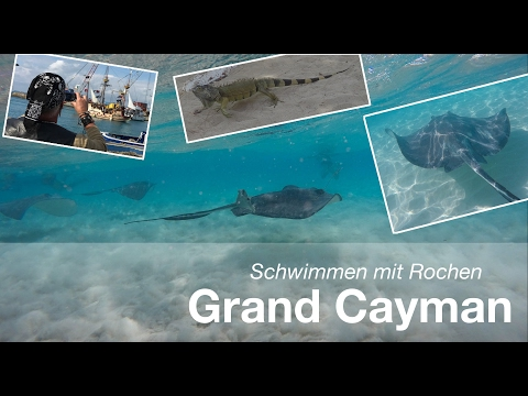 AIDA Karibik: Grand Cayman - Schwimmen mit Rochen