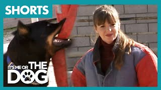Victoria Stilwell encounters a trained bite dog!