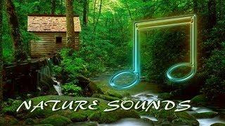 Фонова інструментальна музика та звуки природи для підняття настрою