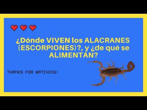 dónde-viven-los-alacranes-[escorpiones]-y-de-qué-se-alimentan!!!-3-😱🦂