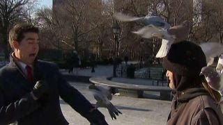 Watters' World: Christmas quiz edition(Jesse Watters asks folks if the know the reason for the season., 2016-11-26T03:01:07.000Z)