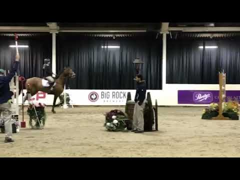 Calidos Subtle, 1.30m Clear Round