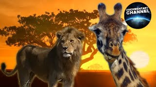 WILDLIFE IN SERENGETI | Wild animals | Serengeti National Park