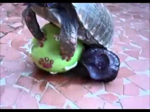 Turtle Bangs Squeeze Toy YouTube