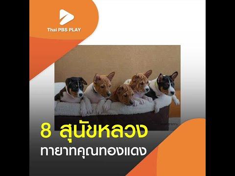 8 สุนัขหลวง ทายาทคุณทองแดง