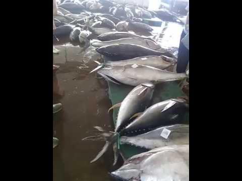 Pasar Ikan Muncar