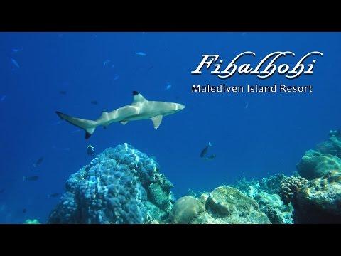 Fihalhohi - Malediveninsel im Süd Male Atoll