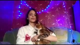 Все мои кошки / умерла кошка в видео?