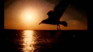 Blackbird - Sarah McLachan (subtitulada al español)