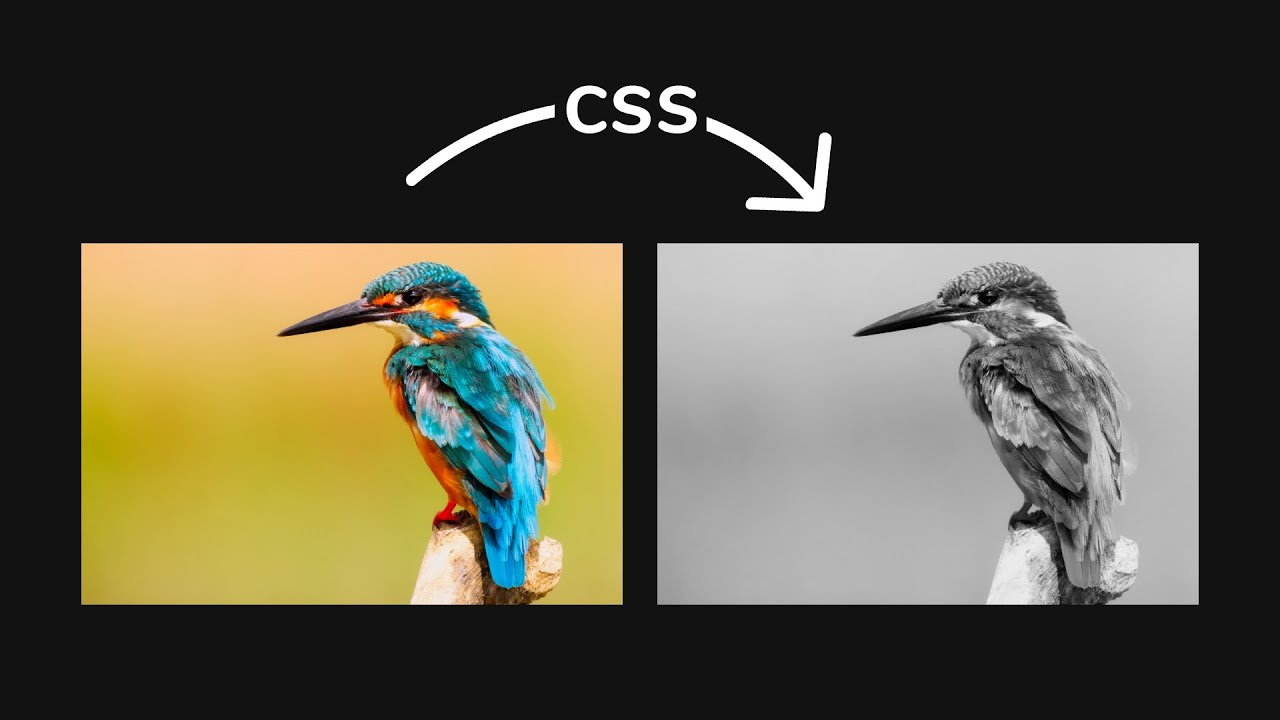 How To Create Black and White image with CSS | Gray Image Using CSS | HTML & CSS Tutorial