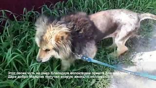 Прикосновение добра Работа волонтеров приюта для животных Дари добро по спасению животных.