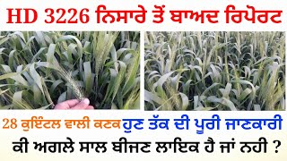HD 3226 Wheat variety full information