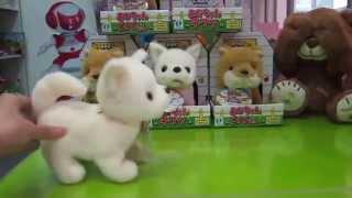 Thú bông thông minh  chihuahua  Iwaya Đồ chơi Nhật Bản Hitomi.vn