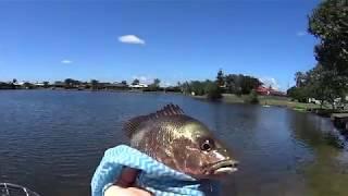 Land Based Fishing Gold Coast - Mangrove Jack / Bream / Fingermark -
