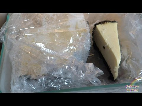 How to Freeze a Cheesecake