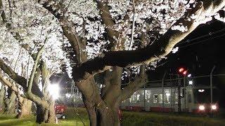 【風景動画】松戸駐屯地 × 新京成電鉄 ~桜並木ライトアップ~ 2019