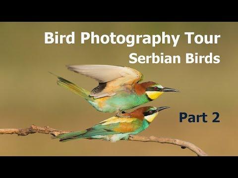 Bird Photography Tour Serbia: Part 2