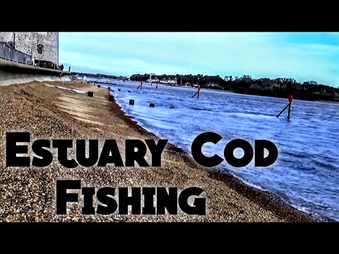 River Deben Cod Fishing - Sea Fishing