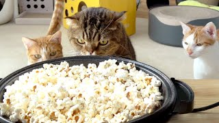 I made some popcorn for myself but my cats started to steal it! (ENG SUB)