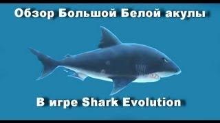 обзор большой белой акулы great white shark